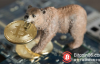 """【蜗牛娱乐】2019 年加密货币还是走不出""""熊市""""阴霾?"""